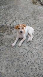 Título do anúncio: Cachorro (a) para ADOÇÃO