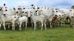 Fazenda à venda, 839 alqueires por R$ 26.000.000 - Zona Rural - Sonora/MS
