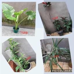 Vendo estas plantas