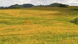 Fazenda de terra Roxa venda Nova Tebas soja gado