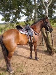 Cavalo castrado mestiço Mangalarga.