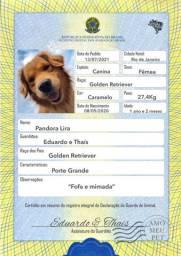 Certidão e Identidade Pet