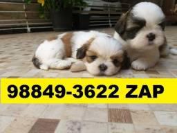 Canil Filhotes Cães Top BH Lhasa Maltês Yorkshire Pug Beagle Bulldog Shihtzu Fox