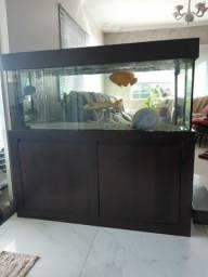 Aquario 140×50×50