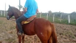 Vendo esse cavalo lindo i manso