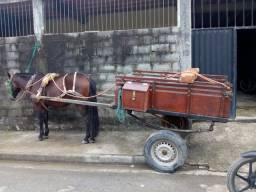 Vende-se cavalo, charrete e carroça