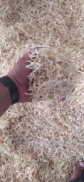 Título do anúncio: Raspas serragem de madeira de pinus