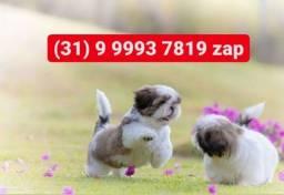 Título do anúncio: Canil os  mais lindos filhotes, shihtzu, basset, poodle, yorkshire, lhasa apso