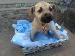 Doação de belíssimos filhotes de cachorro!
