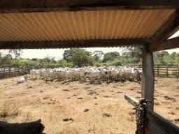 Memorial Fazenda Capão Alto - 10.000 Hectares - Poconé