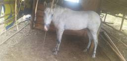 Égua mansinha