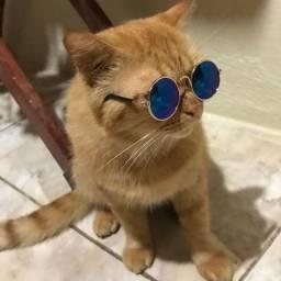 ??Óculos pet!??