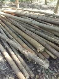 Plantação de eucalipto pra escoras