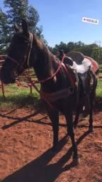 Vendo cavalo de laço !