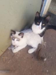 Diz-se dois gatinhos