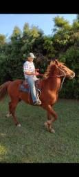 Cavalo muito bom, cavalo tem mais ou menos 7 anos