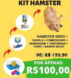 Kit hamster