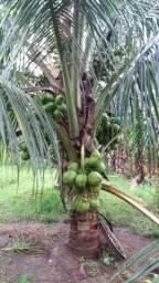 Vendo Fazenda 350 hectares