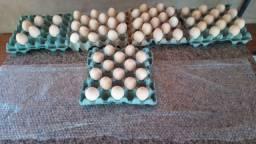 Ovo de Pavão disponível