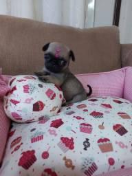 Mini pug fêmea