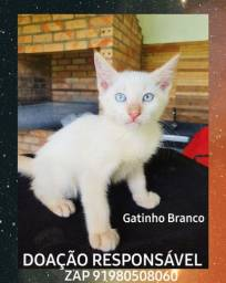 Lindo gatinho Branco