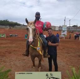 Título do anúncio: Coberturas Cavalo Mangalarga Marchador Neto do Fator da Cavarú-Retá