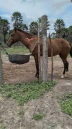Egua machadeira