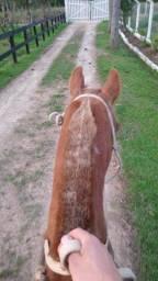 Título do anúncio: Cavalo manso