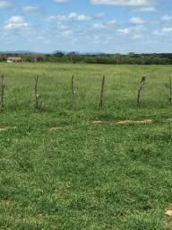 Vendo fazenda em Sousa-PB
