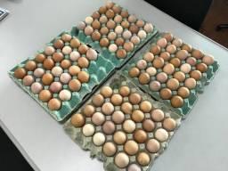 Ovos Para chocar - Embrapa 51