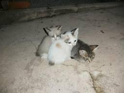 Gatinhos p adoção. Facilito entrega