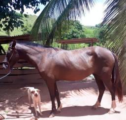 Vendo égua ou troco por bezerro ou novilha(o)