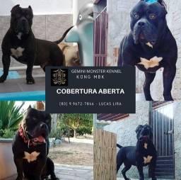 COBERTURA ABERTA, PROMOÇÃO DE FIM DE ANO