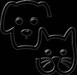 Título do anúncio: Dog Wallker