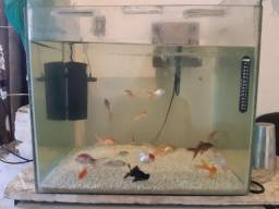 Título do anúncio: Vendo aquario de 105 litros