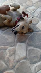 Adoção Cachorra/cadela