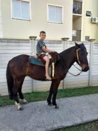Cavalo bom de laço
