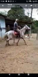 Título do anúncio: Cavalo MT barato puro de picada