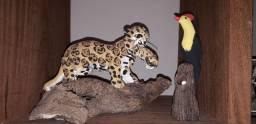 Onça pintada e um pássaro com ninho