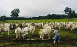 Título do anúncio: Fazenda  para criação de Gado