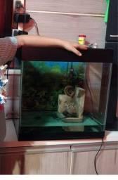 Título do anúncio: Vendo aquário 200,00