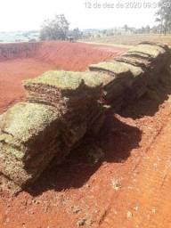 Plantiu de grama R$10 acima de 400 metros