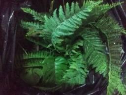 Parede artificial mais plantas
