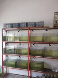 Aquário para venda de peixinhos