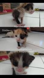 Gatinhos para a adoção (leia a descrição)