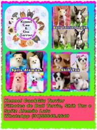 Título do anúncio: Sucesso de vendas , filhotes em 10x no cartão