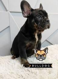bulldog frances preto bleck tan