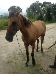 Égua trouco ou vendo algo do meu interesse (n pego outro animal)