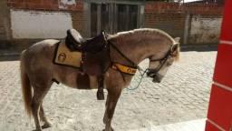 Cavalo mestiço