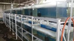 Estante em alumínio com 72 aquários ( 70 litros )